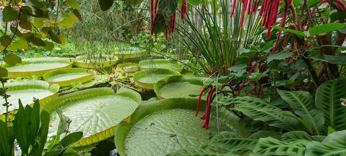 Zoom sur : Le Jardin Botanique de Jean-Marie Pelt